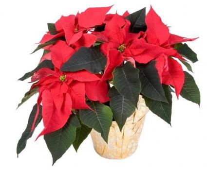 Wreath & Poinsettia Sale